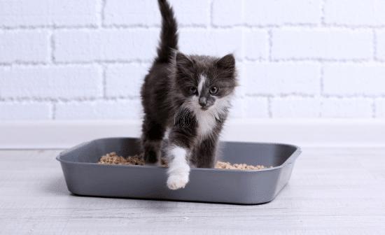 גור חתולים בארגז הצרכים