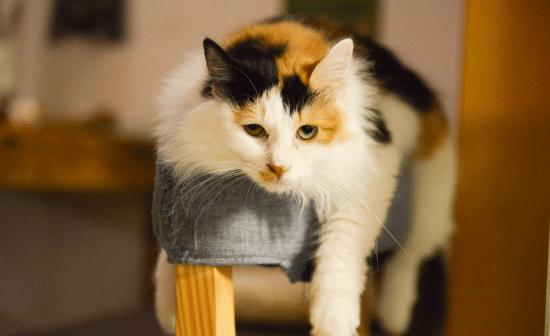 חתול משועמם