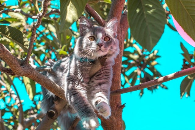 חתול על עץ