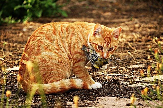 חתול עם ציפור בפה