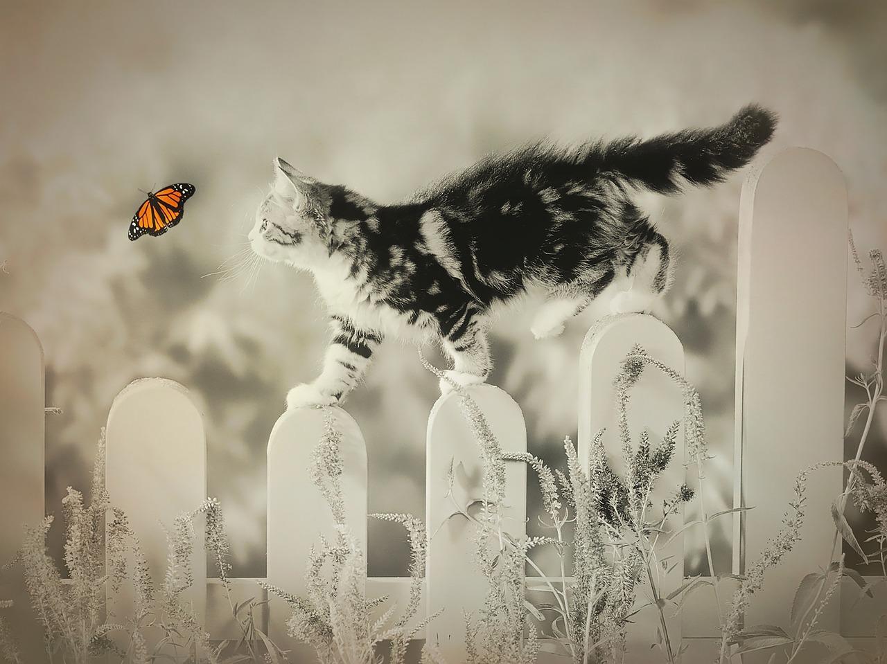 גור חתולים על גדר
