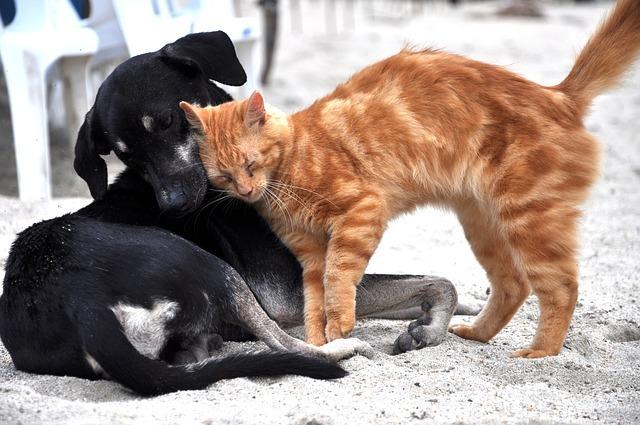 כלב וחתול - גור חתולים סוציאליזציה