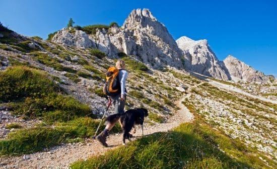 לטייל עם הכלב ולחזור בשלום