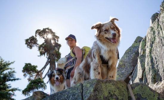 כלבים מביטים מעבר למצוק