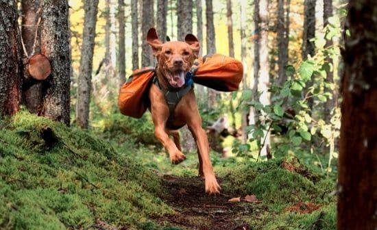 כלב רץ קדימה בטיול בטבע