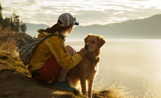רגיעה בסוף היום - כלב ואשה