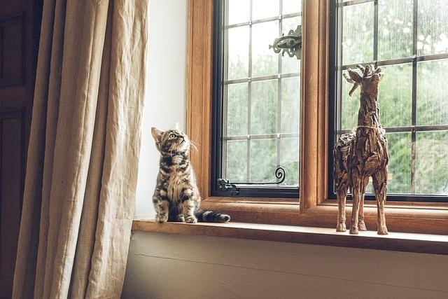 חתול ליד חלון