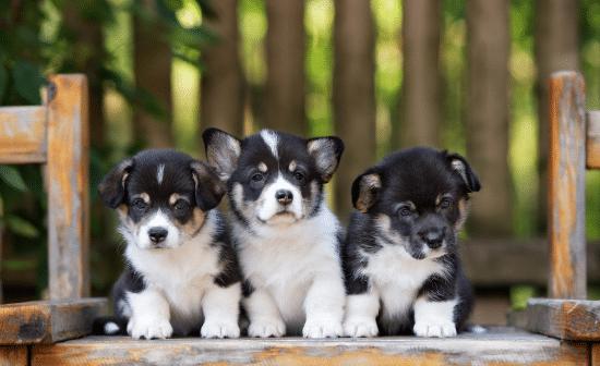 גורים כלבים
