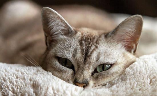 התנהגות משונה של חתולים: החתול שלי לא בא להגיד לי שלום