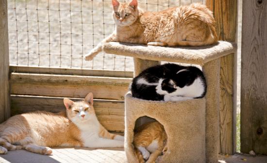 חתולים בשמש