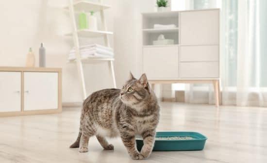 מחוץ לקופסא: חתול עם ארגז החול שלו