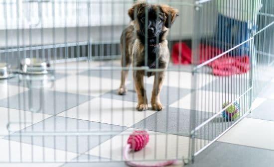כדאי שיהיה לכם כלוב אילוף ממתכת עבור גור הכלבים החדש