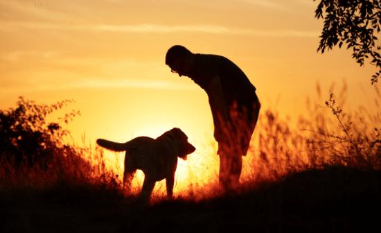 איש וכלבו בשקיעה