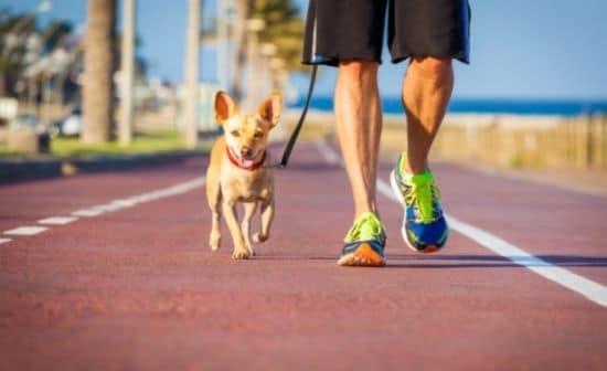 טיול ביום קיץ - כלב ובעליו