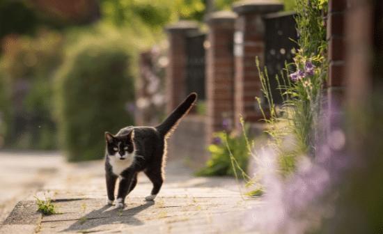 חתול על מדרכה