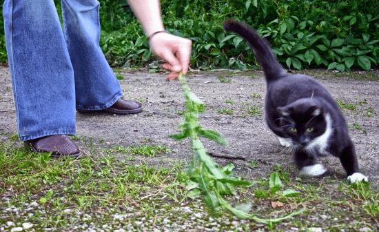 אישה משחקת עם חתול