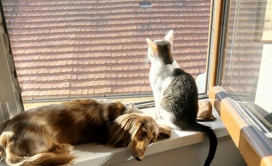 חתולל וכלב בחלון