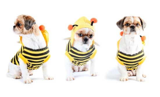 כלבים לבושים כדבורים