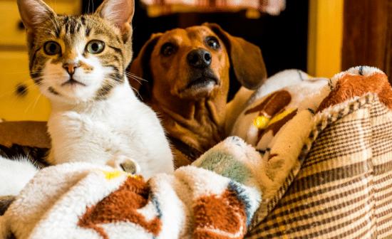 כלב וחתול מופתעים