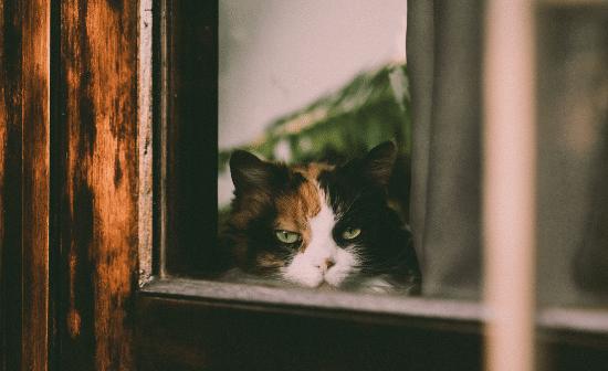 חתול מדוכא בחלון