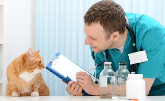 חתול אצל הוטרינר